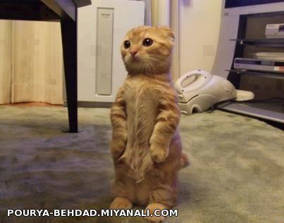 این قیافه منه وقتی میخوام عیدی بگیرم  شماهم اینجوری هستید عاااااایا؟؟؟؟
