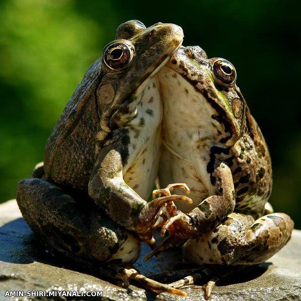 عاشقانه ترین عکس سال!!!!