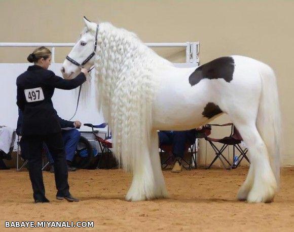 اینم یه اسب دیگه