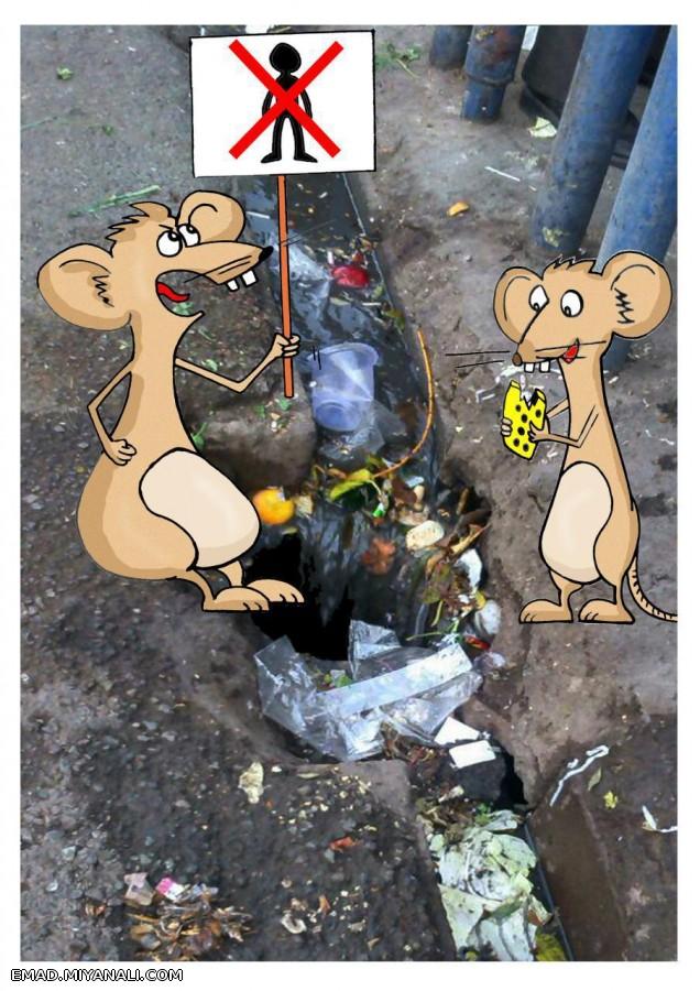موش ها در ورودی بازار بزرگ میانه