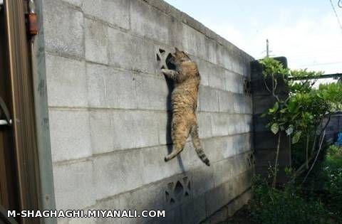 گربه فضول