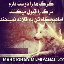 گرگ ها...