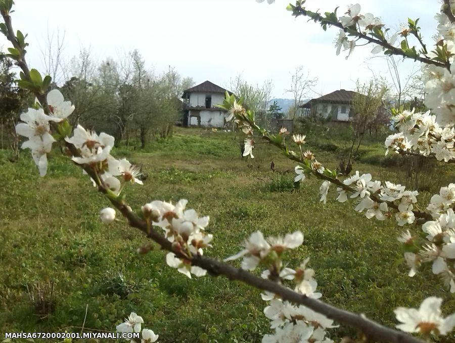 ویلای زیبای ما در شمال،استان گیلان (فروشی)
