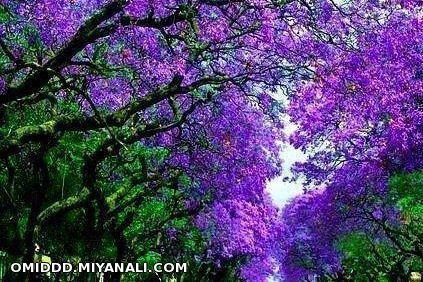طبیعت زیبا...(البرز،مهرشهر)