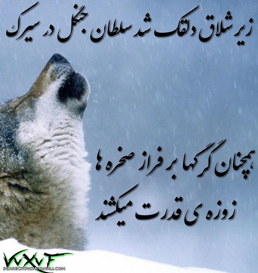همچنان گرگها زوزه ی قدرت میکشند