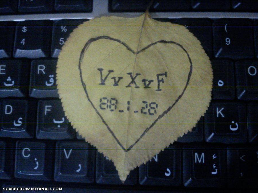 VvXvF
