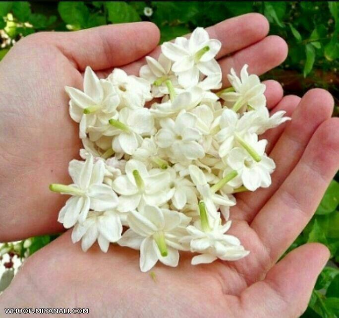 تقدیم مادرای گل ...ونور به روح مادرایی که کنارمون نیستن