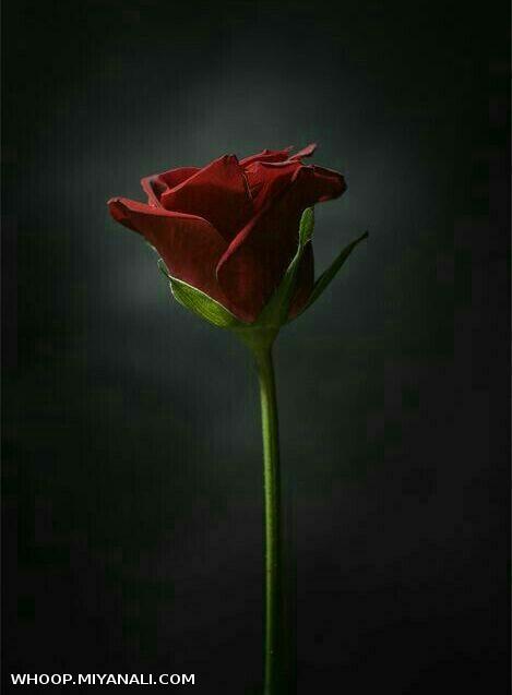 تولدت مبارک ،گل آبی من
