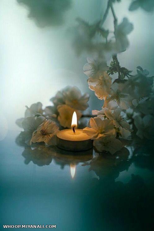 یک نور یک گل