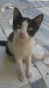 نمایی دیگـــر از گربــه خوشگل منــ . بهله !!!