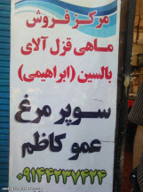 ماهی قزلاالای بالیسین عمو کاظم