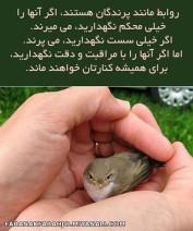 روابط مانند پرندگان هستند