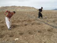 کشت مزرعه جالیز به روش نواری