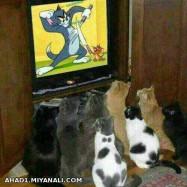 موش و گربه...
