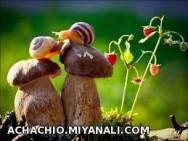 حلزون های عاشق
