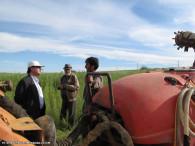 سمپاشی مزارع گندم میانه بر علیه آفت سن گندم