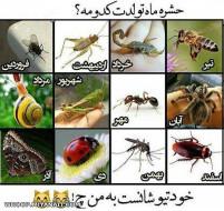 حشرات ماه تولد