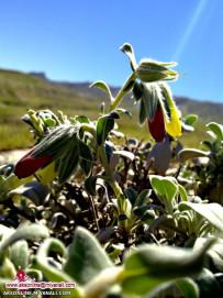گلهای کوهستان سال1393عباس آباد