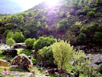 طبیعت زیبای روستای عباس آباد93