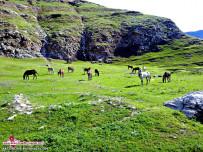 طبیعت روستای عباس آباد-دره شهر