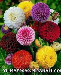 این گل تقدیم میکنم به کسانی تو این مدتی که نبودم ،حالمو پرسیدن