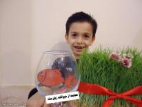 ماهی قرمز امسال ما