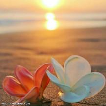 دلم رو درشفق ساحل کاشتم