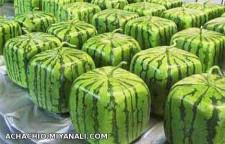 هندوانه مکعبی
