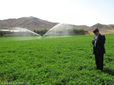 مزرعه آبیاری تحت فشار یونجه در میانه