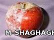 سفیدک سطحی سیب