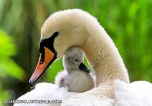 حس مادرانه