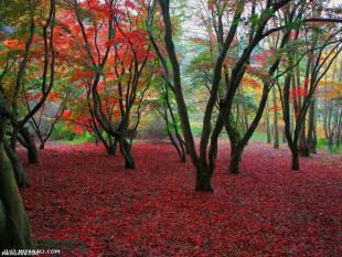 پادشاه فصل ها پاییز، فصل نقاشی خدا