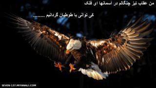 من عقاب تیز چنگالم در آسمانها  ای فلک ..........