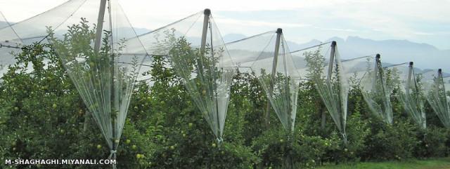 لزوم استفاده از فناوری های جدید در بخش کشاورزی